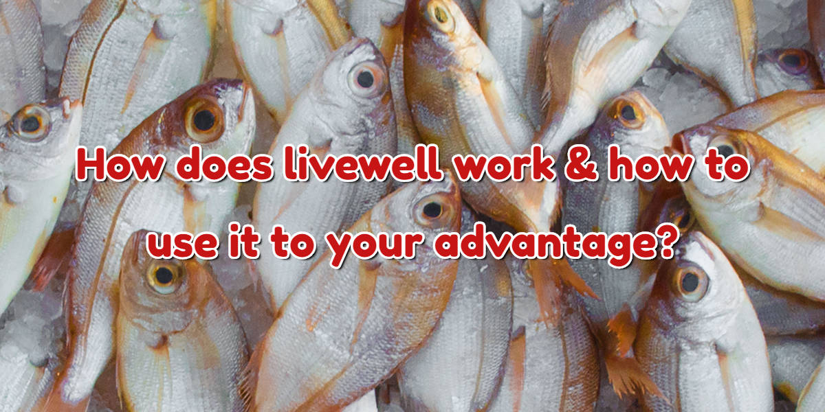 How does livewell work & how to use it to your advantage?