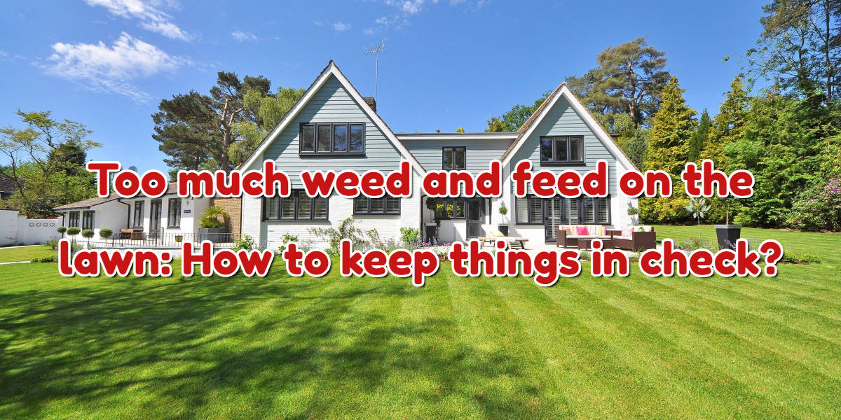 Too much weed and feed on the lawn