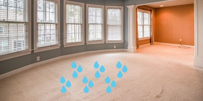 spilled water on carpet
