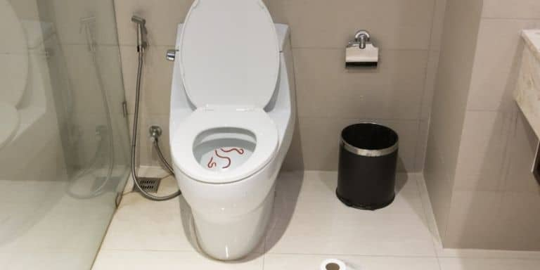 worms in toilet